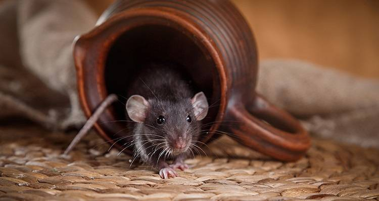 Борьба с мышами на дачном участке: 5 лучших средств