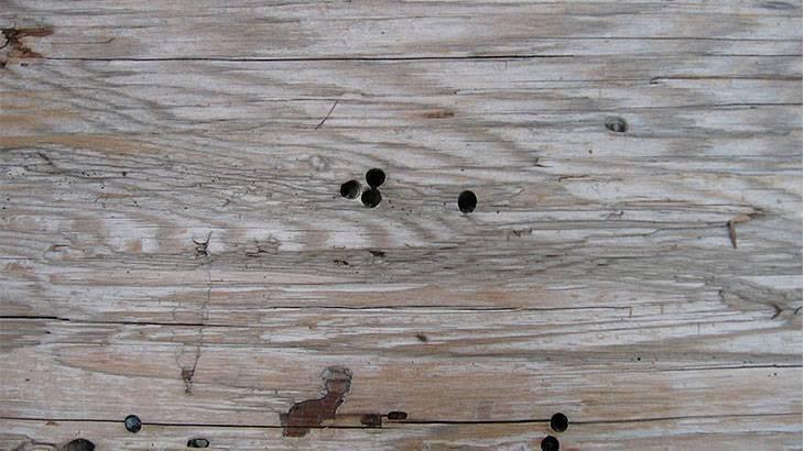 Как уничтожить шашеля в деревянном доме
