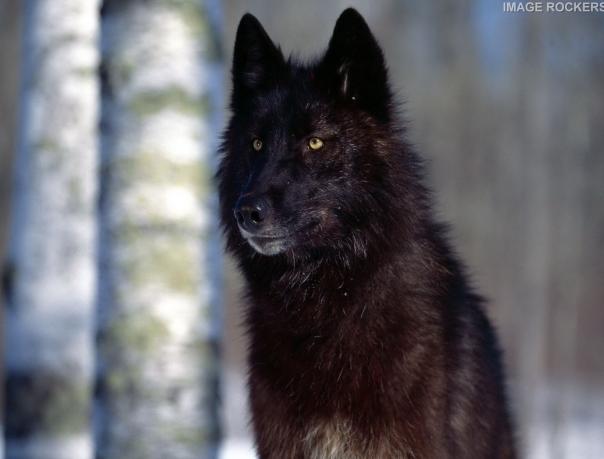 Паук-волк: фото и любопытные факты