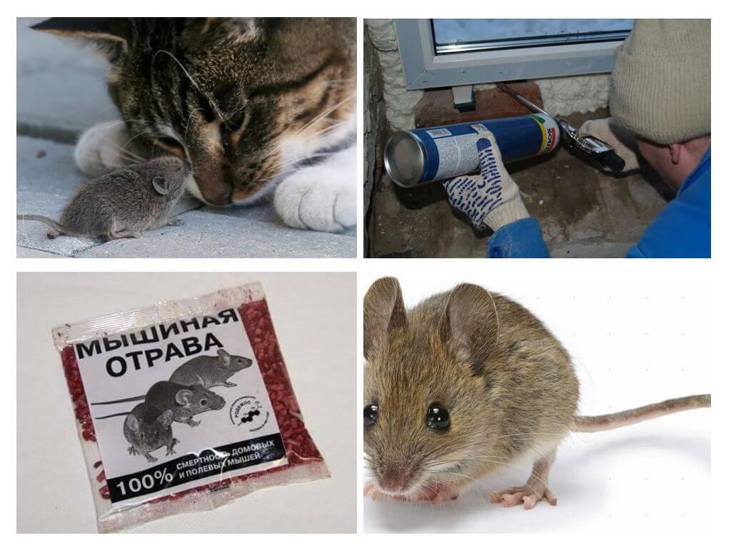 Едят ли мыши монтажную пену