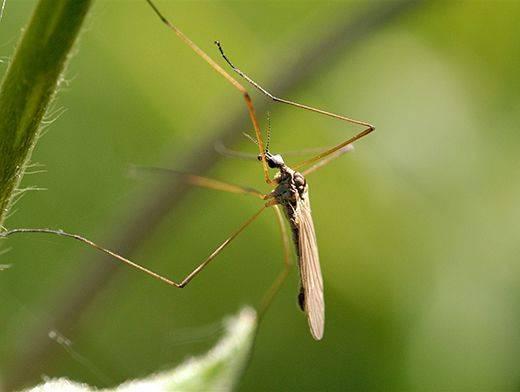 Пластины от комаров: вредны ли они для человека и питомцев?