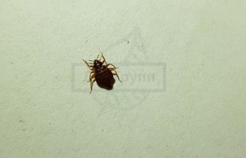 Чёрные жуки в доме: как избавиться