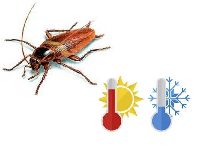 Чего боятся тараканы — обзор разных средств, от полыни до аквафумигатора
