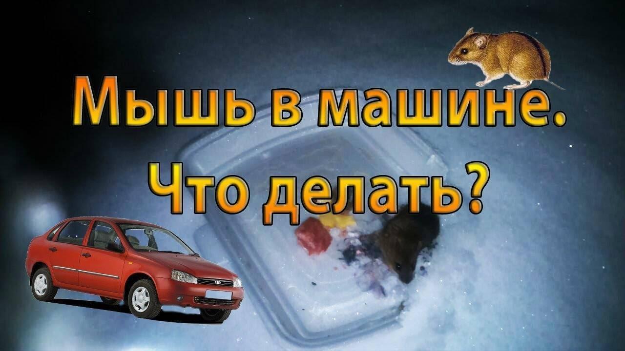 Как вывести муравьев из машины