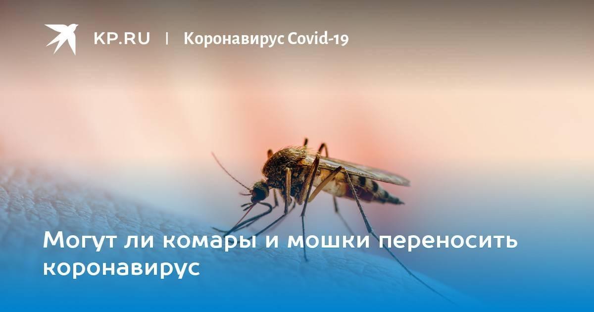 Москиты: фото, описание и меры безопасности
