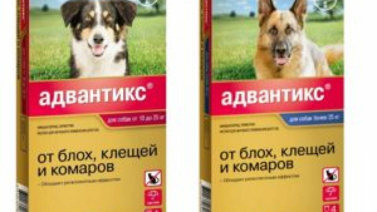 Капли от клещей для собак практик