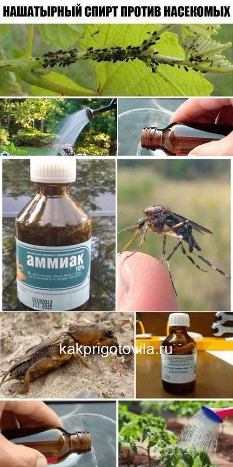 Использование народных средств после укусов комаров и мошек