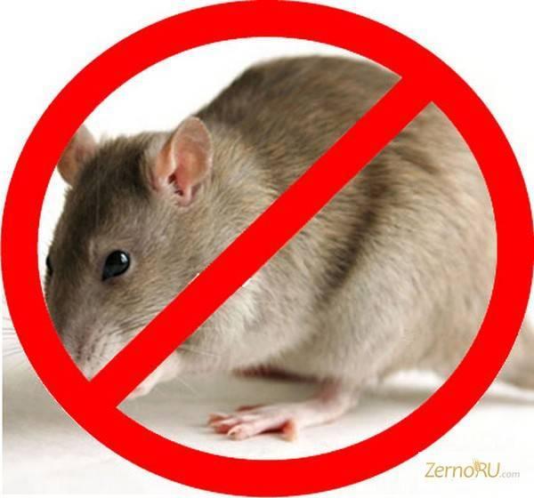 Лучший яд от мышей и крыс: обзор самых эффективных средств
