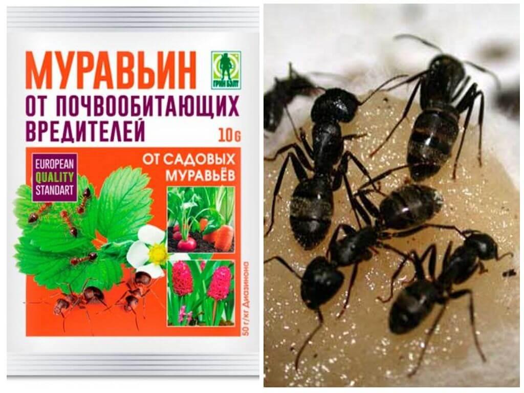 Как избавиться от муравьёв — все методы борьбы
