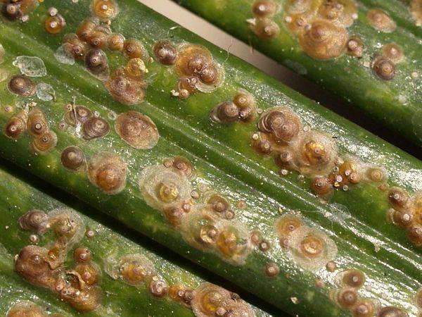 Как избавиться отщитовки накомнатных растениях, ипочему важно быстро опознать вредителя