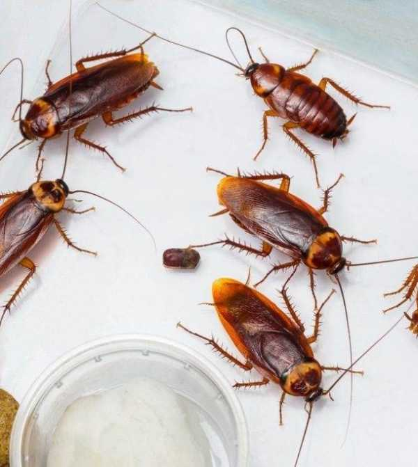 Какой гель от тараканов лучше – 12 эффективных марок