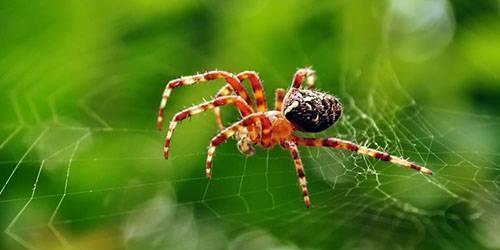 К чему снится паутина