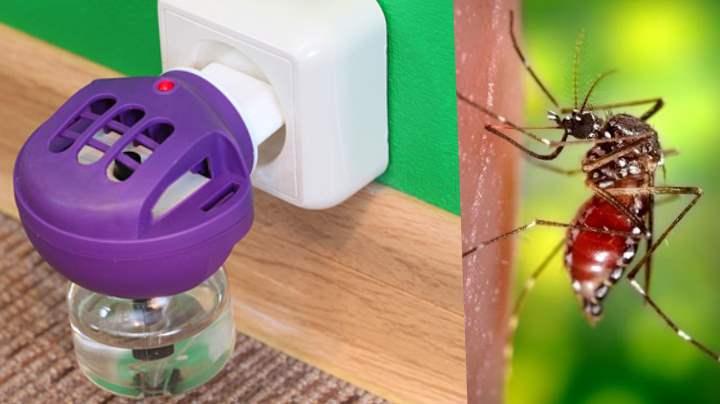 Как видят комары. как видят комары и что их привлекает к человеку. как зимуют комары