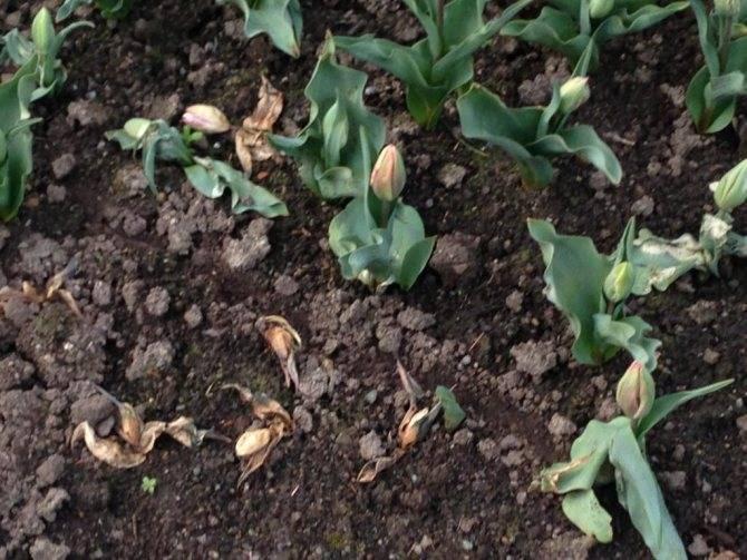 Почвенный клещ в комнатных растениях
