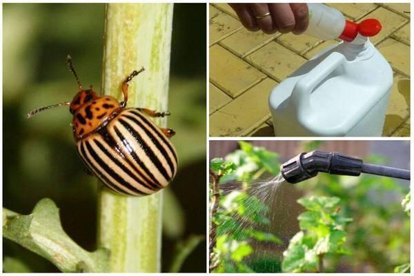 Эффективное средство борьбы с тараканами регент и отзывы о нем