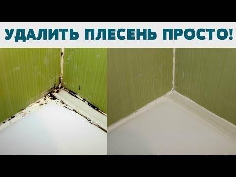 Как очистить плесень в ванной между плитками на стене: обзор эффективных средств