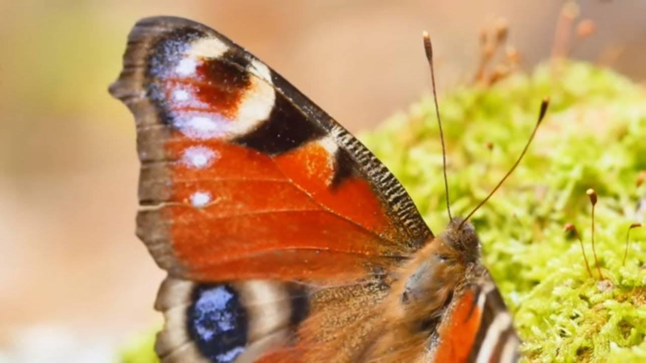 Как бороться с гусеницами на смородине народными средствами