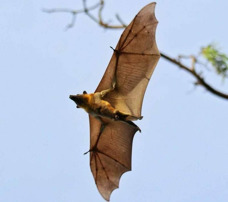 Как вывести летучих мышей