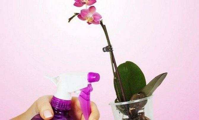 Как избавиться от мучнистого червеца на орхидее – эффективные средства и способы