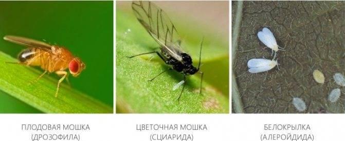 Описание мошек в природе и их влияния на человека
