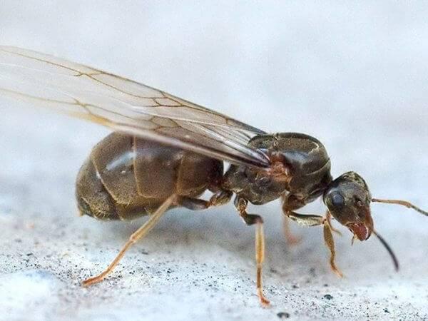 Сколько живут муравьи: в природе и в муравьиной ферме