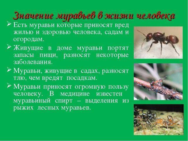 Как вывести муравьев с огорода – борьба с садовыми муравьями