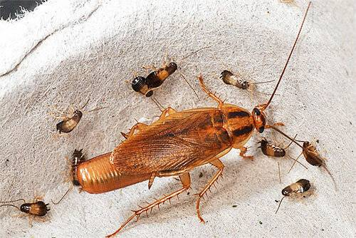 Что делать, если в квартире завелись тараканы?