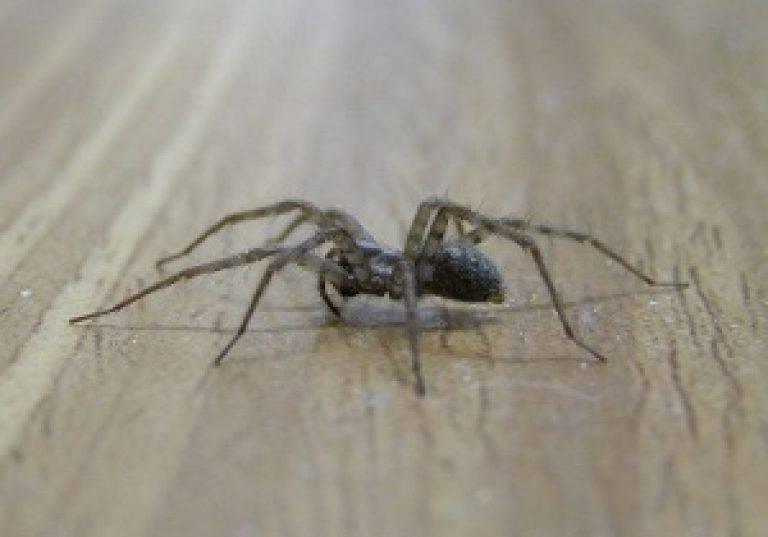 Как избавиться от пауков в доме: инсектициды, народные средства и важные рекомендации. как избавиться от пауков в квартире, частном доме, во дворе, на улице в теплице? чем обработать дом от пауков