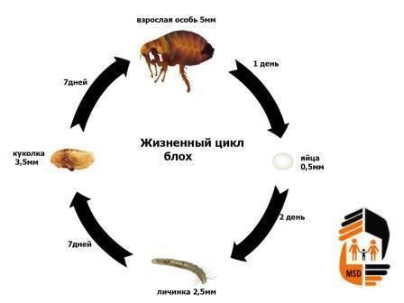 Как избавиться от блох на животном