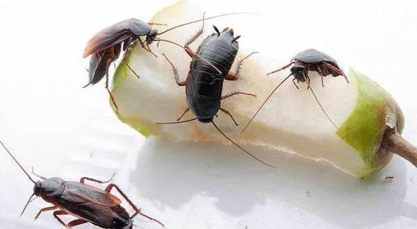 Как избавиться от тараканов раз и навсегда