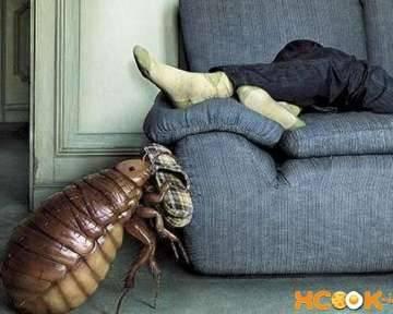 Клопы в диванах – причины появления, методы выведения