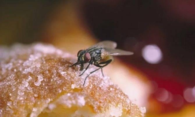 Много мух в доме осенью — откуда и как с ними бороться?