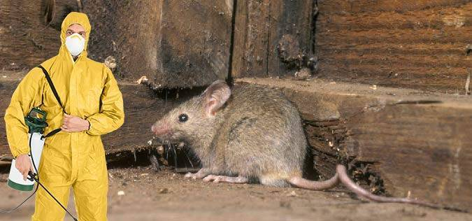 Уничтожение мышей в квартире в спб