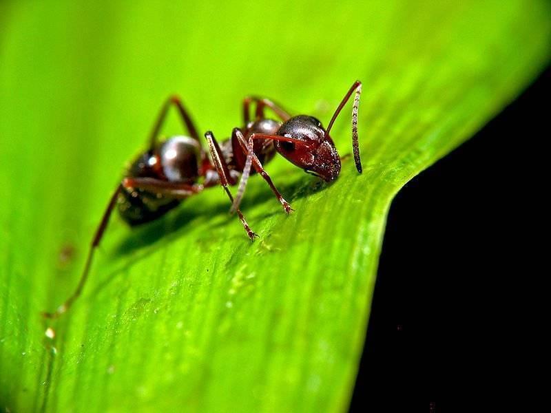 «сонник муравейник приснился, к чему снится во сне муравейник»