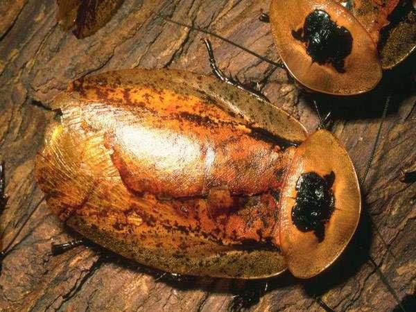 Прозвища тараканов