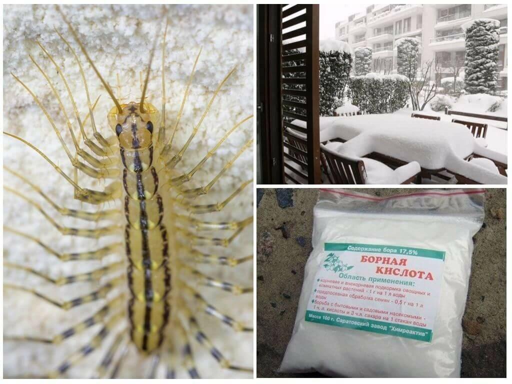 Мухоловка: опасно ли насекомое для человека, способы борьбы