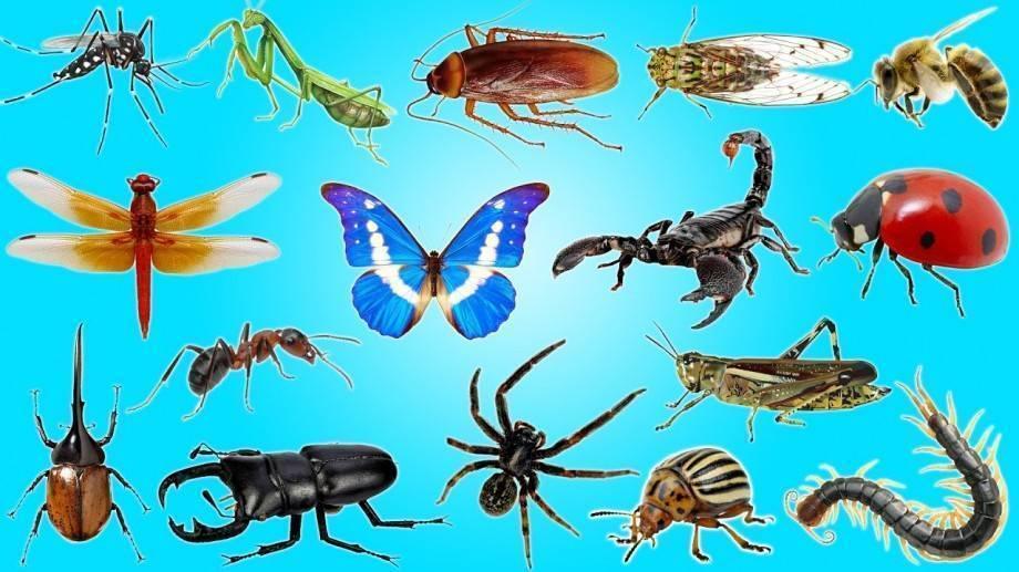 Почему муравьи могут поднимать больше своего веса. сколько весит муравей и какую массу он может поднять