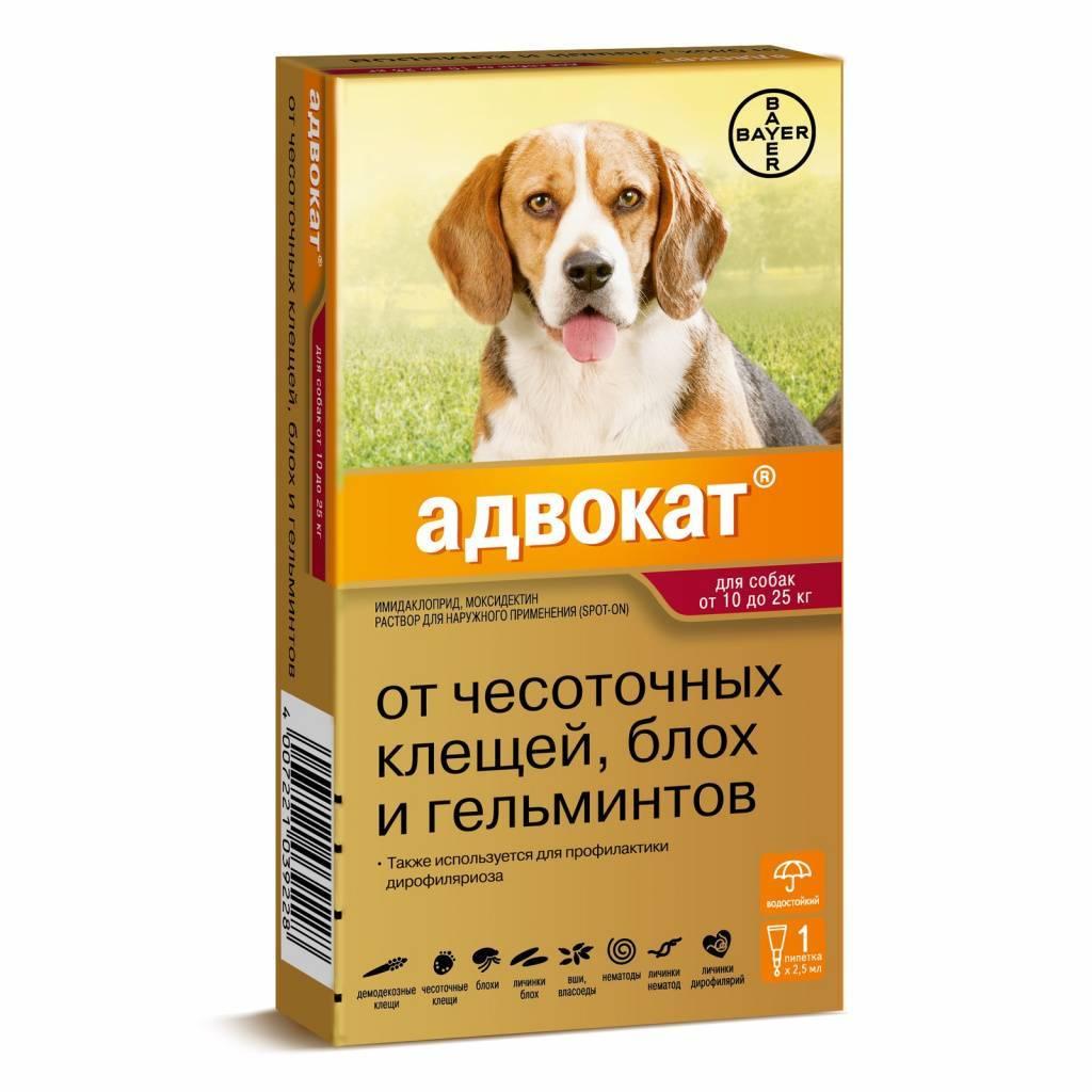 Инспектор – капли для собак: инструкция по применению, отзывы