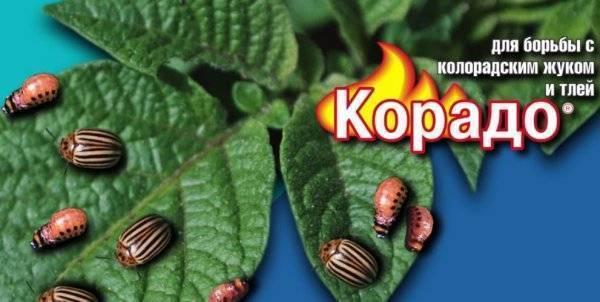 Как разводить корадо от колорадского жука, луковой и морковной мухи