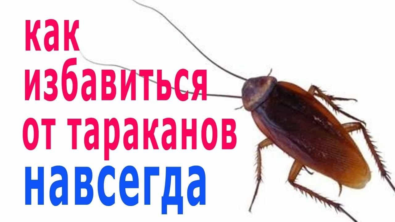 Лучшее средство от тараканов в квартире — рейтинг препаратов