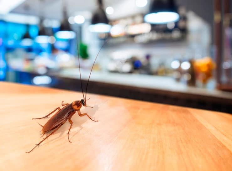 Как избавиться от тараканов народными средствами в домашних условиях