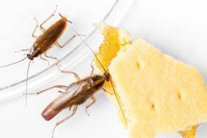 От соседей бегут тараканы: что делать, куда обращаться и жаловаться