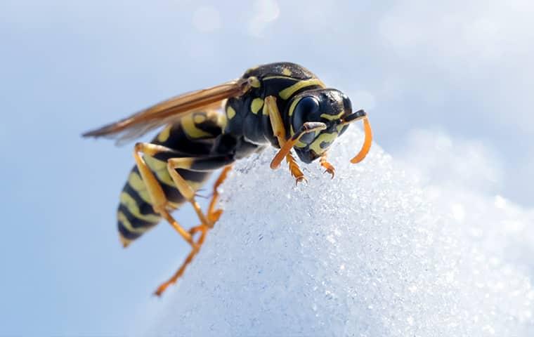 Опасные соседи: как избавиться от гнезда шершней под крышей