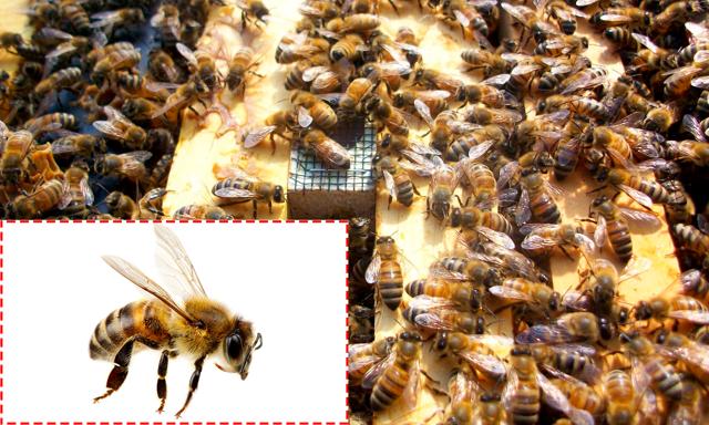 Основные правила ухода за пчелами зимой