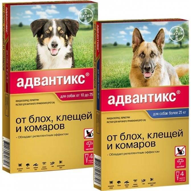 Препарат «дана ультра» для борьбы с эктопаразитами собак и кошек