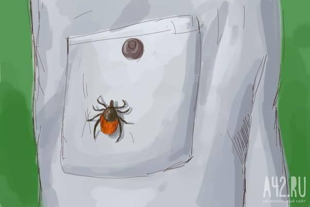 Скрытая угроза: как избежать укусов клещей. простые и надежные меры защиты от клещей как защититься от клещей в городе