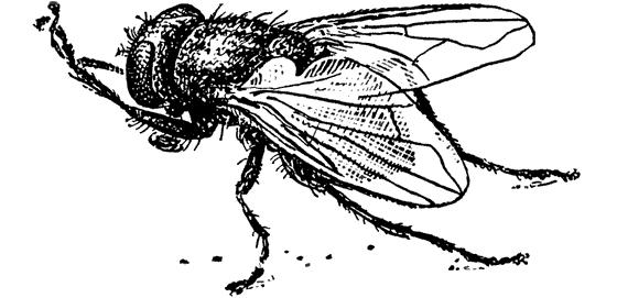 Укус в руку насекомого