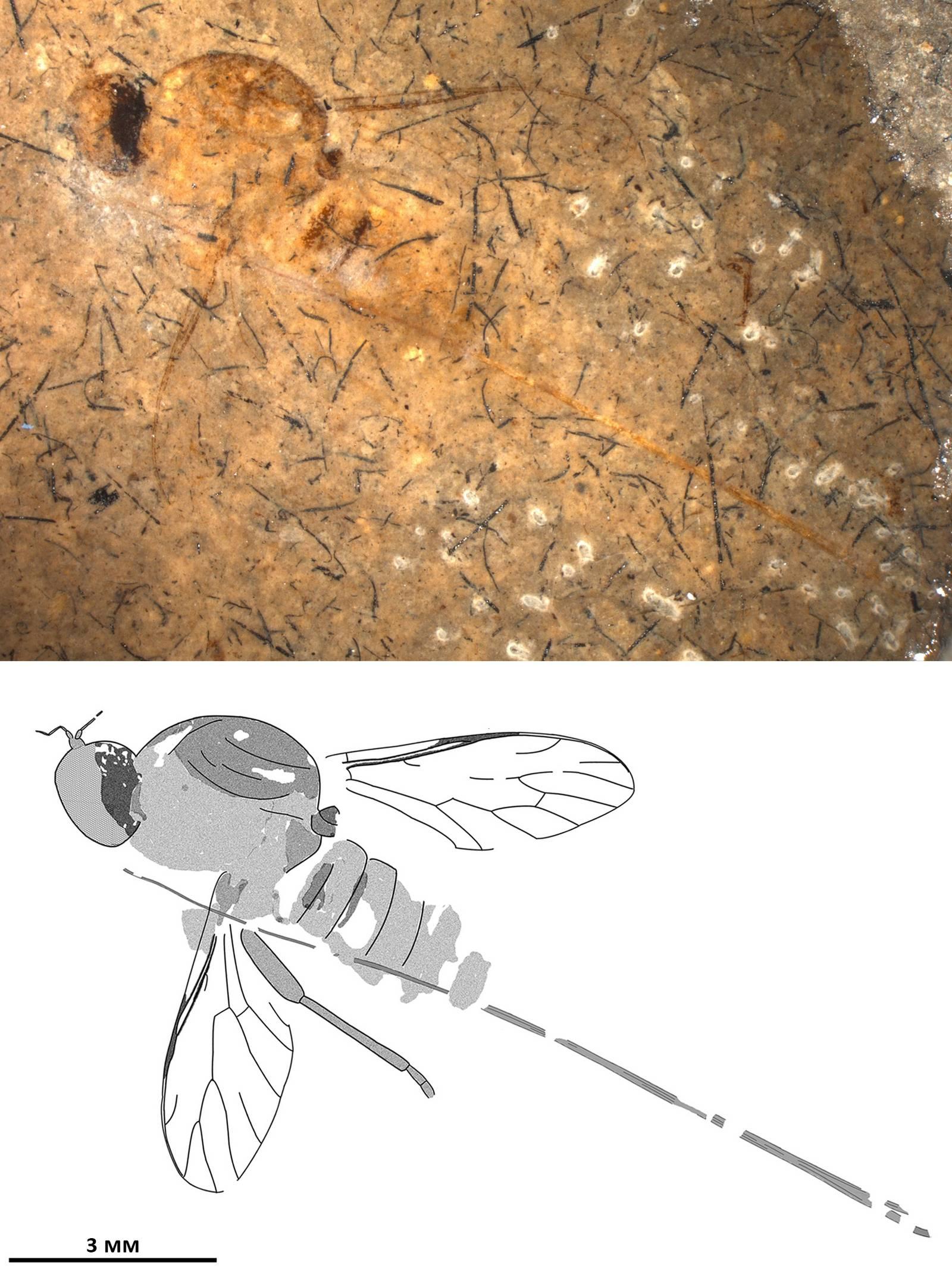 Скорпионница – кем приходится скорпиону?
