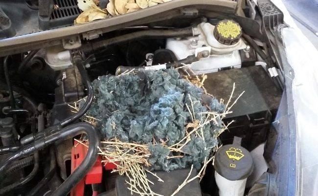 Когда джерри собрал вещи и съехал: как избавиться от запаха мышей в машине