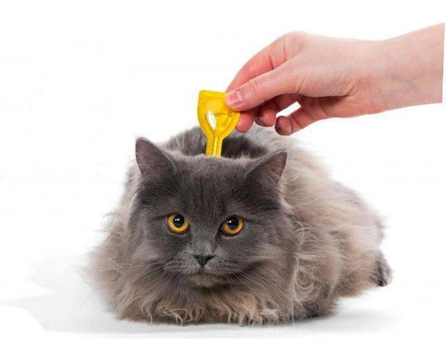 Как капать капли от блох кошке правильно